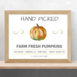 hand picked pumpkins