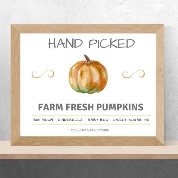 hand picked pumpkins